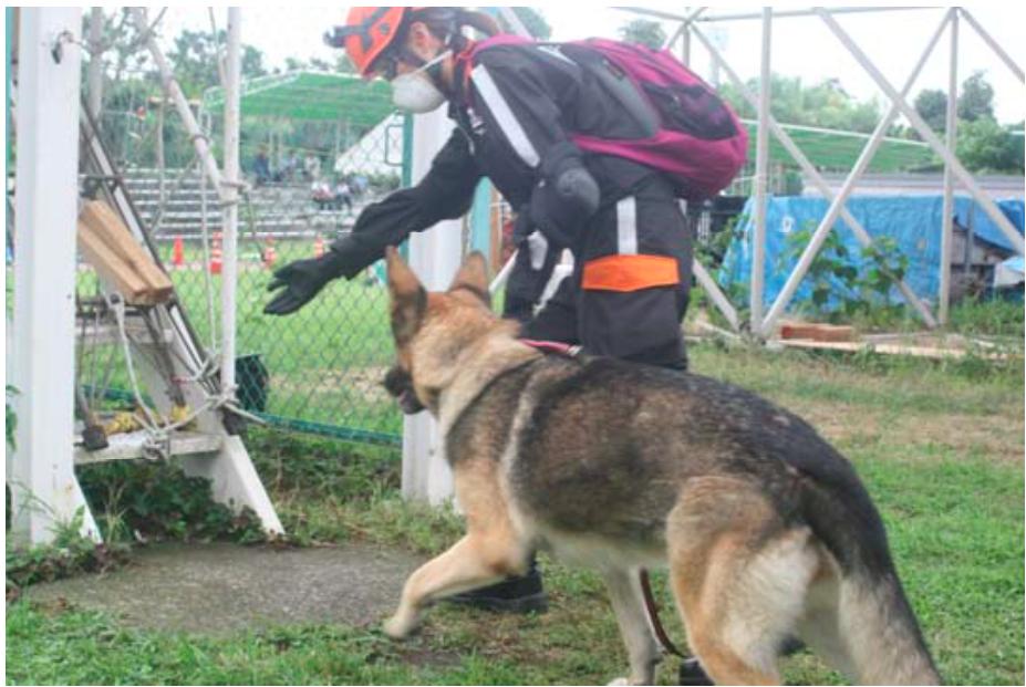 災害救助犬訓練